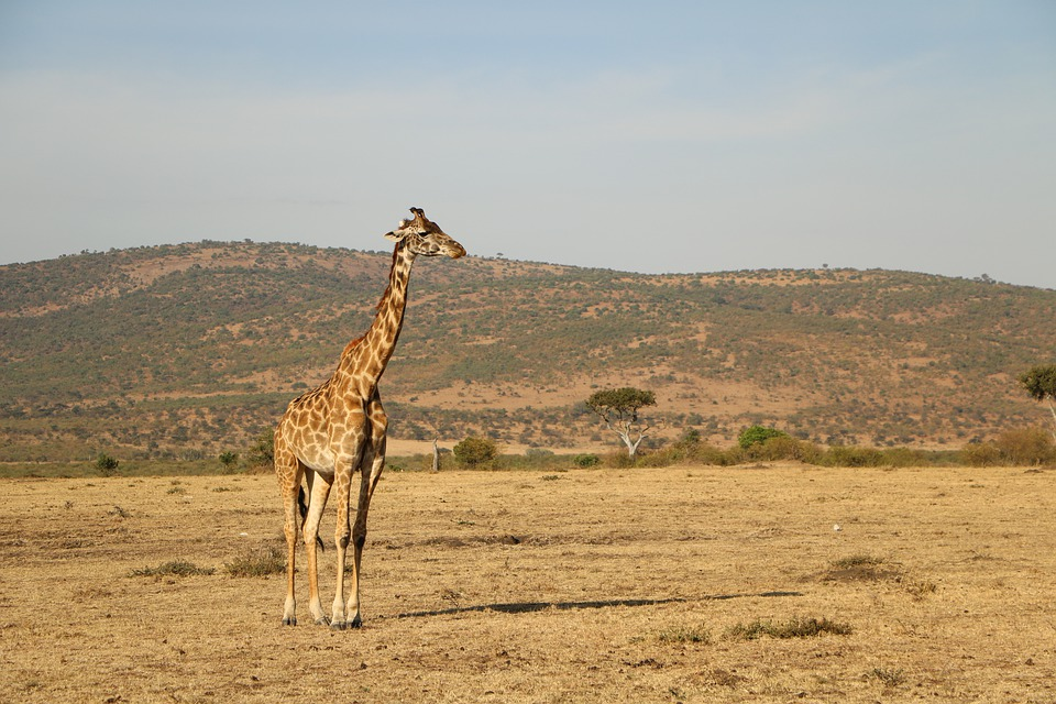 The Basic Guide to Planning Your Adventurous African Safari